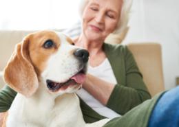 Hundar lindrar stress